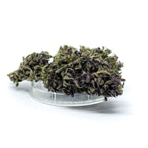 "Susz konopny ""Purple Haze"" 1g"
